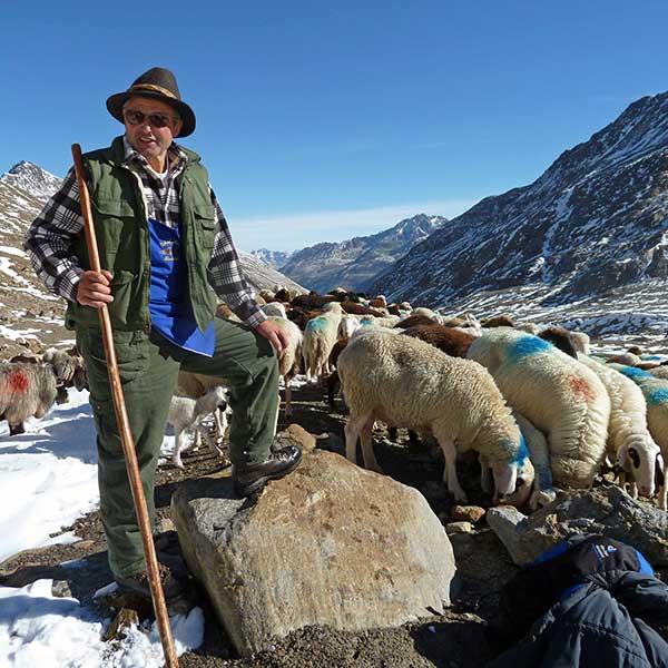 Josef Götsch Obmann Agrargemeinschaft Niedertal - Schafübertrieb Vent, Ötztal