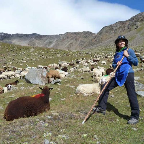 Author as assistant shepherd - Sheep drive Vent, Ötztal, Tyrol