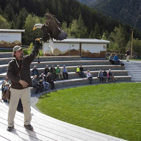 Falkner Juraj Macko - Greifvogelpark