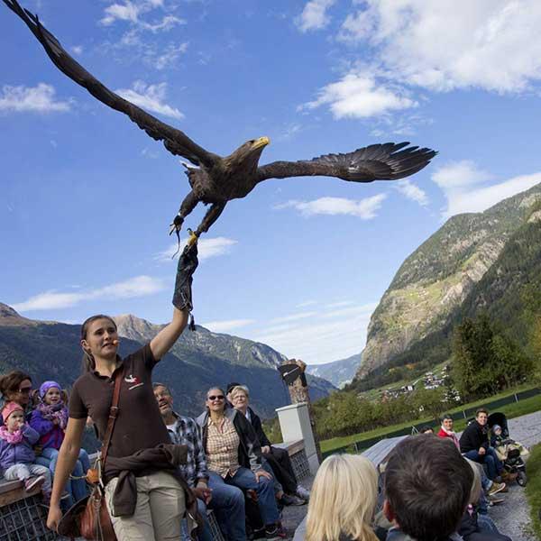 Falknerin Katharina schickt Greifvogel auf den Weg - Greifvogelpark