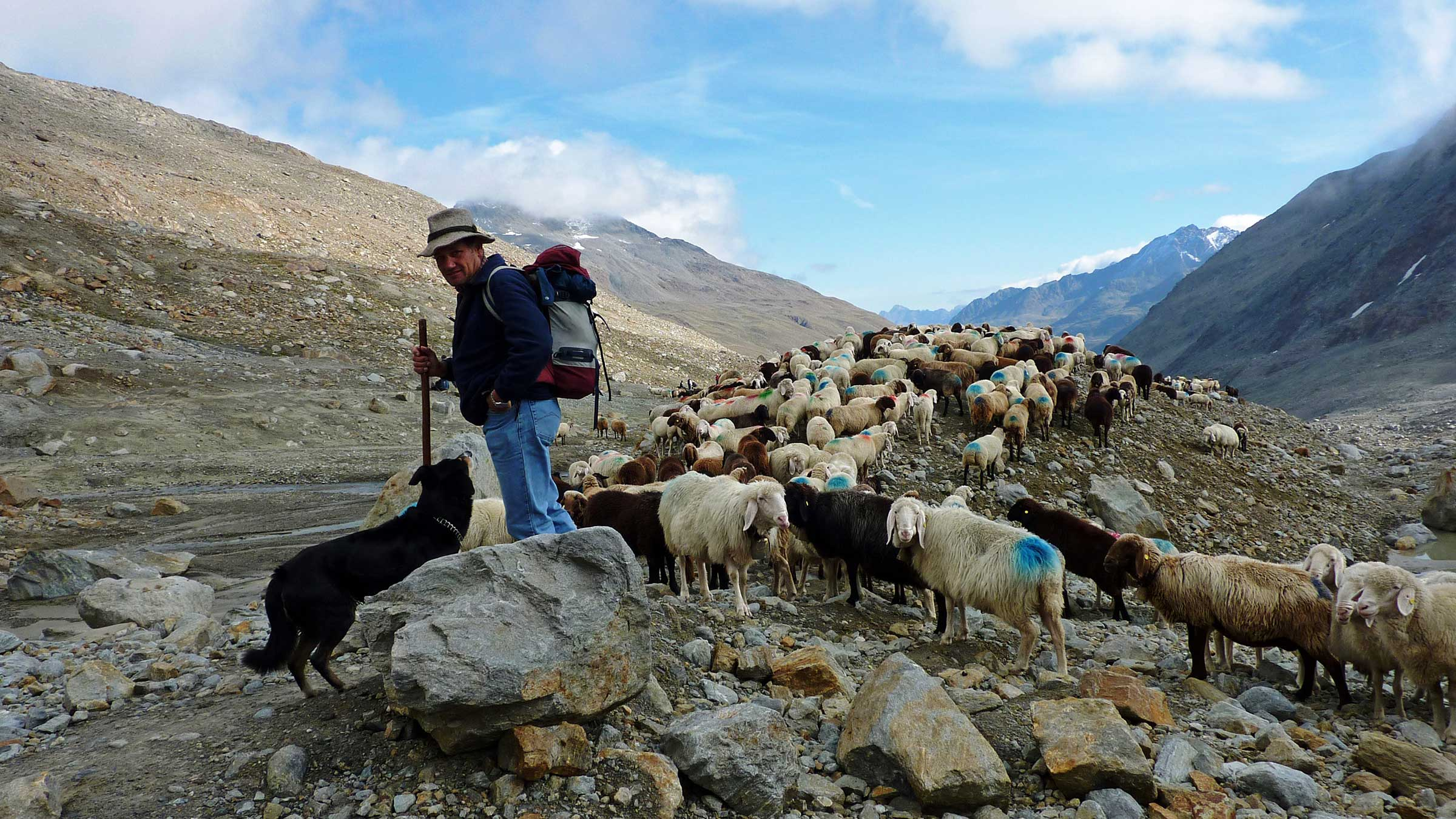 A summer break for sheep