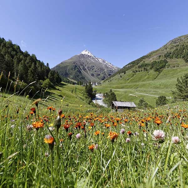 Blick auf Vent im Sommer - Naturpark Ötztal