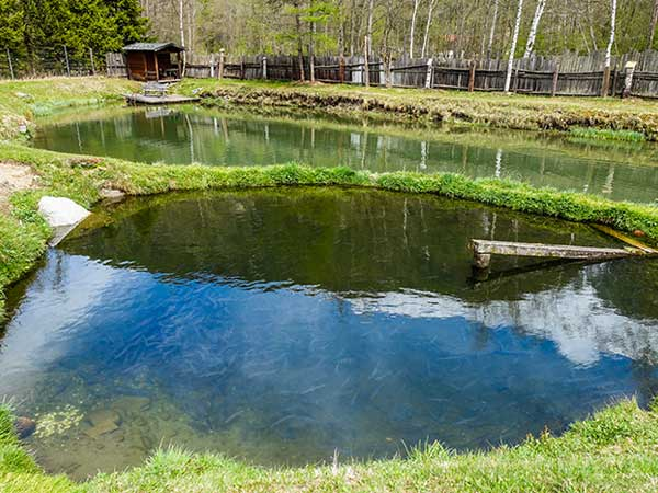 "Aufzuchtstation der ""Ötztaler Quellfische"" - Tiroler Grillmeisterschaft"