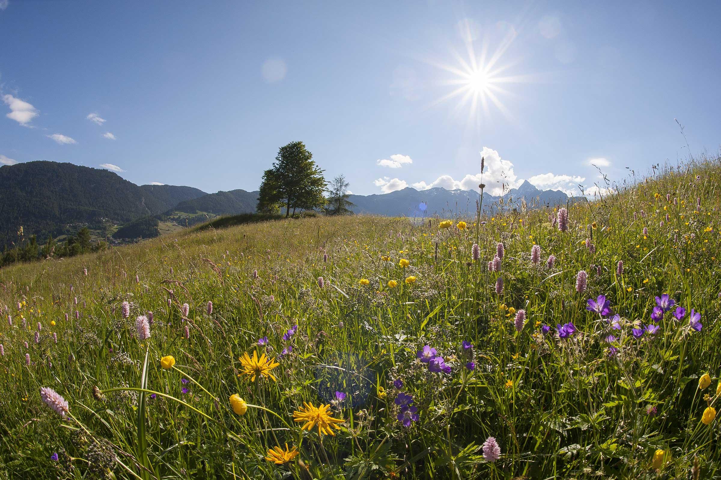 Blose Sautens - Aussichtsberge Ötztal