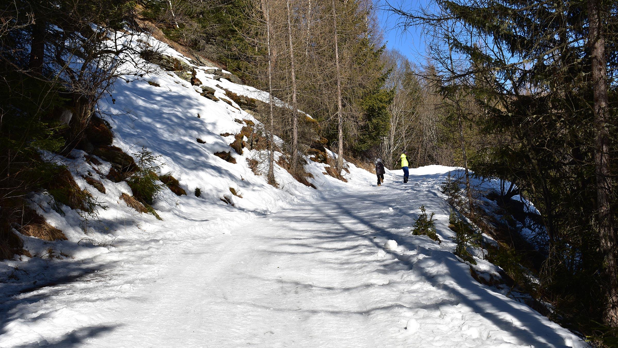 Auf dem Weg zur Wurzbergalm - Rodelbahn Wurzbergalm Ötztal