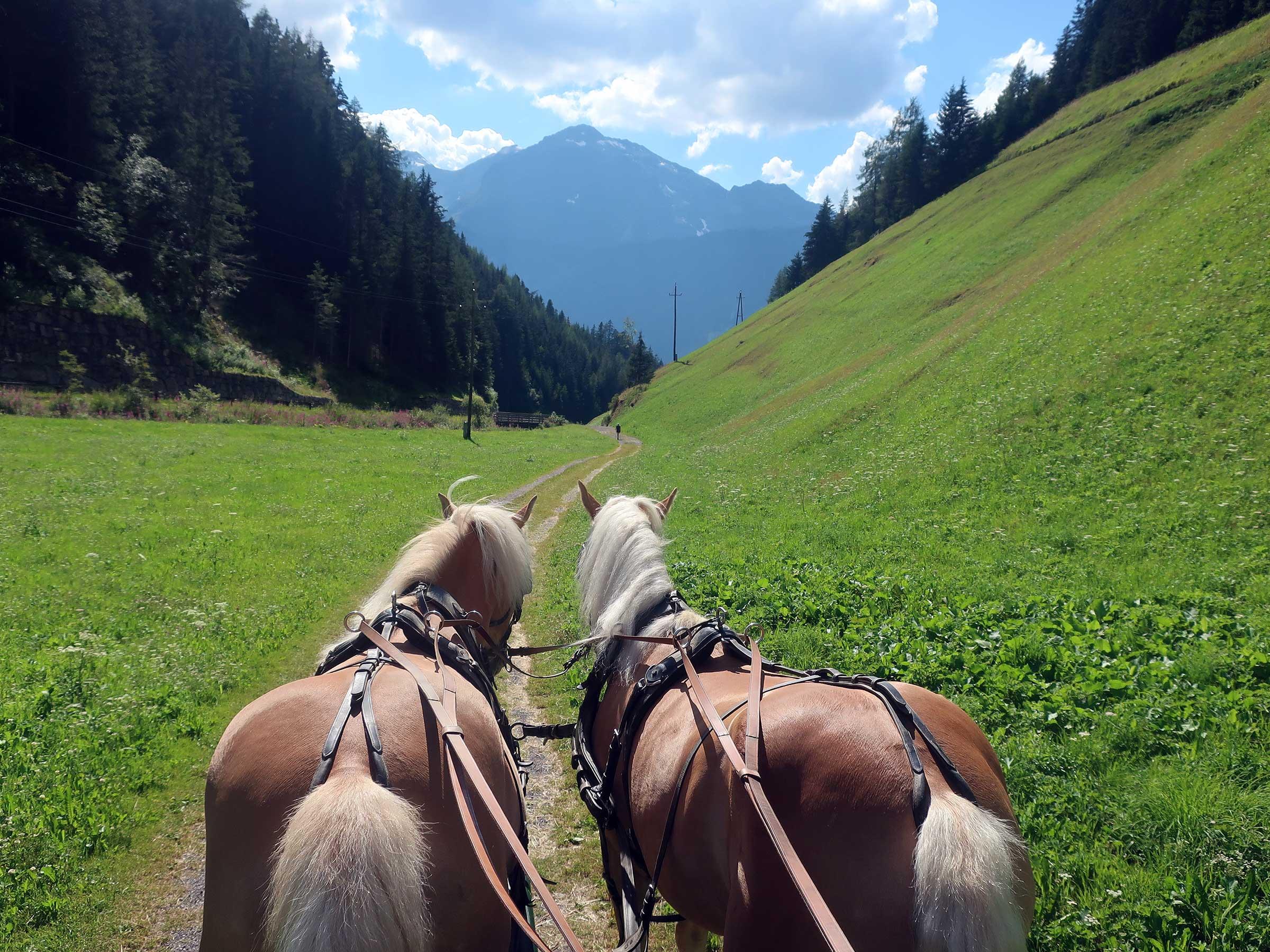 Kutschenfahrt in Niederthai - Reiten, Kutschenfahrten und Streichelzoos Ötztal