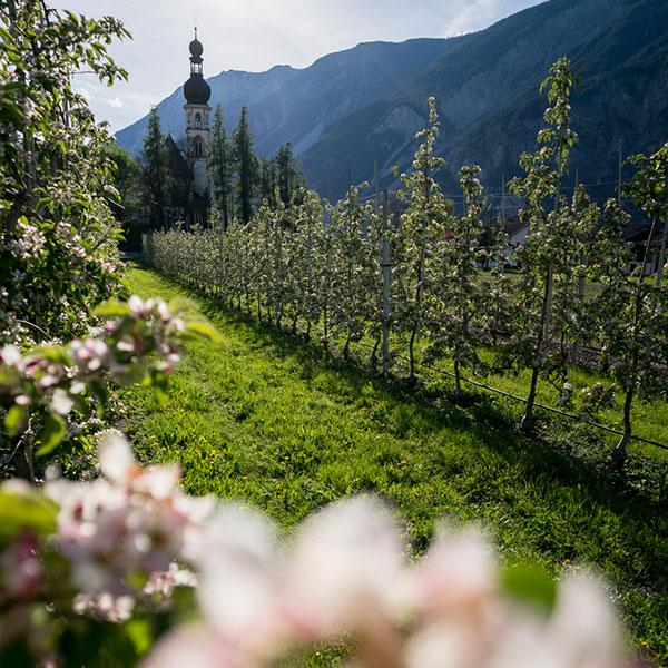 Apfelblüte in Haiming - AREA 47 Nachhaltigkeit